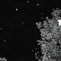 楠の上のいびつな光 ~ オーブ写真集・Old Photos (8)