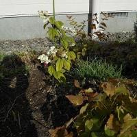 庭も淋しくなりました。 枯れ葉ばかりが目立ち、ゆく秋を惜しむように…