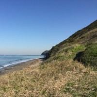 海辺調査@内房