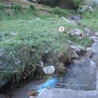 井水取り入れ口付近の草刈り