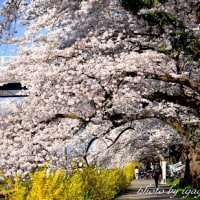 一目千本桜 №2