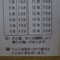 イヌの年齢