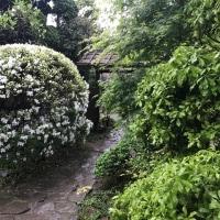 「子平町の藤棚」は雨もよく似合う