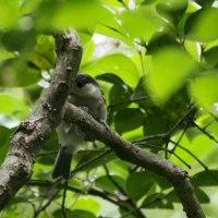 6月24日の鳥撮り山歩・・・