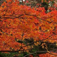 長府庭園の紅葉