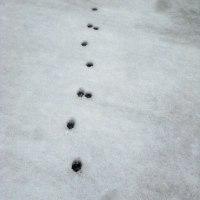 やっと雪解け