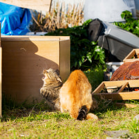 小さな猛獣たちの闘い @相島のネコたち