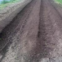 ◆ 畑作業