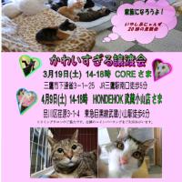 猫譲渡会3/19&4/9都内14時-18