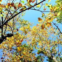 さきたま緑道にも秋の気配