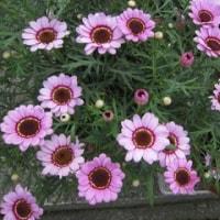 散歩でお花を一杯見てきました。名前?ですが・・・