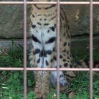 静かな多摩動物公園