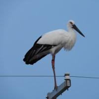 10月22日の鳥撮り・・・