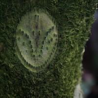 冬の植物園31(ヨシ)