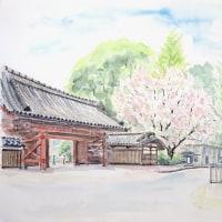 八重桜の東大赤門をスケッチしました