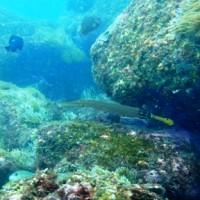 深島ダイビング 10月でも水温25℃