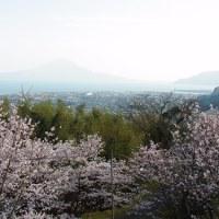 【桜島と桜09】加治木高岡公園の桜