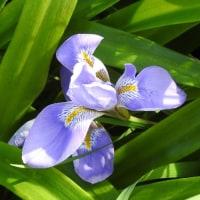 鎮国寺で、見掛けた花