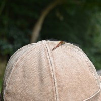芹沢散歩・帽子に赤とんぼ