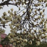 春が近づいている