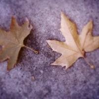 ある秋の一景
