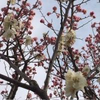花の季節スタートは