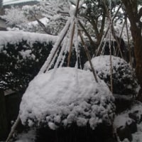 一日違いで冬に一変