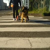 弁慶君と雑草園-48