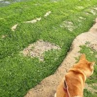 アオサの段々畑