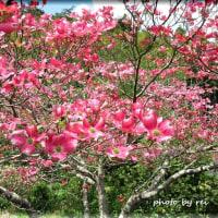 桜がおわるといっせいに、若葉が噴出します。