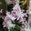 カサブランカが咲きました