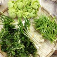 春です、山菜の季節です♬