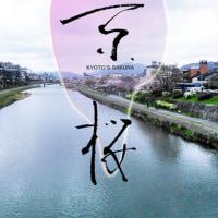 maruka na #京都 さくら