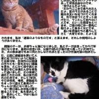 猫たちとの年月