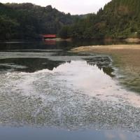 季節はずれの日本の癒し