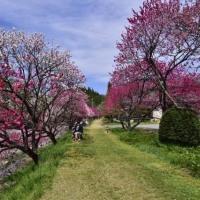 花情報は、このシーズン観光局さんなどが更新してくれます。