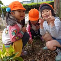 4月27日(木)園の様子