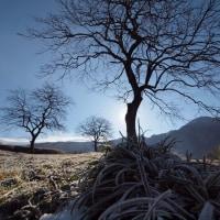 柿の木のある風景・・・由布の里津江地区