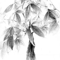オススメ講習会★キホンのデッサン【観葉植物】のご案内