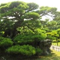 <栗林公園> 日本3名園に勝るともいわれる〝木石の雅趣〟