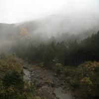 雨の大銀杏