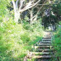 近くて遠い西友七里ヶ浜店(1) 歩くのに良い季節なので鎌倉広町の森へ