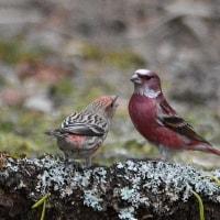 デジブック 『近隣公園の野鳥』