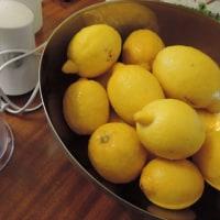 ギリシャからもらってうれしいお庭のレモン!!