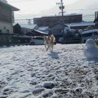 初雪⛄新年会&参加賞ありがと~♪