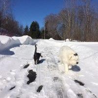 青空の下で久しぶりのプチ犬猫散歩にでた木曜日