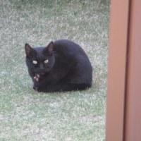 迷子の黒猫...?