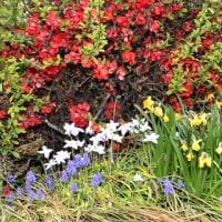 花の四種混合