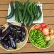 菜園の収穫