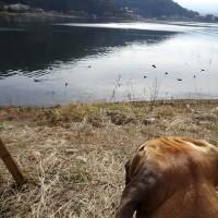 さびしい季節の河口湖 されど・・・